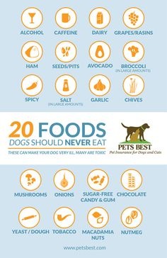 Dog owners: Share this important infographic or click through to print and hang on your refrigerator as a reminder! 20 Foods Dogs Should NEVER Eat