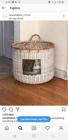 Pet Bunny Rabbits, Pet Rabbit, Baby Bunnies, Cute Bunny, Bunny Room, Bunny Hutch, Bunny Cages, Rabbit Hutches, Honey Bunny