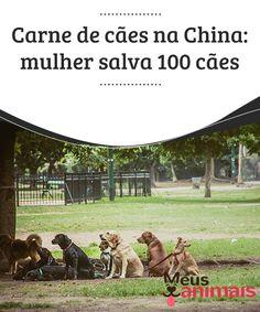 Carne de cães na China  Na #China, uma #mulher de 65 anos evitou que 100 #cães fossem sacrificados, para que tivessem a carne #consumida. Saiba mais sobre o costume de comer cães. #Curiosidades