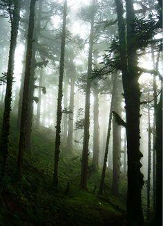 "quiet-nymph:  ""fog n woods""byBrojesh Dangol"