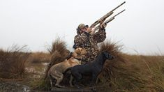Amazing Photos of the Best Working Dogs in the World Hunting Dogs, Working Dogs, Cool Photos, Amazing Photos, Best Dogs, Good Things, Pets, World, Animals