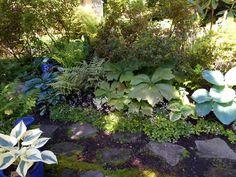 Proliferous Blooms on Bainbridge Island | Fine Gardening