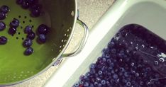 making mini blueberry pies! Mini Pumpkin Pies, Mini Apple Pies, Mini Pies, Mini Pumpkins, Blackberry Dessert Recipes, Blueberry Pie Recipes, Mini Blueberry Pies, Pie Shell, No Bake Pies