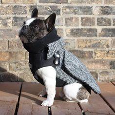if i had a frenchie... The City Coat - Adult Boys French Bulldog/Pug Dog Winter Coat. $149.99, via Etsy.