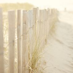 Seaside picket fence in a sunlit sand dune