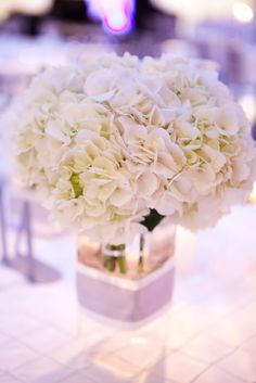 white+hydrangea+nancy+cohn+photography+1.jpg 854×1,280 pixels