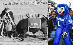 Bulls pride - 1959 vs. 2014 #TBT #UBuffalo #GoBulls