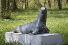 #Hoyerswort Freundlich und neugierig erkundet der Seelöwe seine Umgebung, den Skulpturenpark von Herrenhaus Hoyerswort, wo er 2016 aufgestellt wurde.