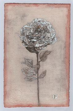 Peonia - Francesco Amatori   Silverpoint Drawing-Wathercoulor