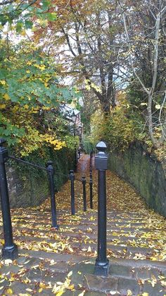 Brunswick Hill Macclesfield in Autumn. Autumnal, Outdoor Furniture, Outdoor Decor, October, Seasons, Memories, Fall, Awesome, Plants
