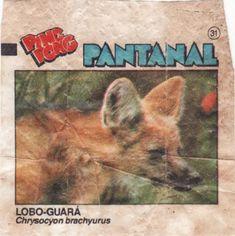 Chicle de Bola Ping Pong Pantanal | Blog do Gilmar Kid, Home Decor, Pantanal, Maned Wolf, Chewing Gum, Balls, Child, Decoration Home, Room Decor
