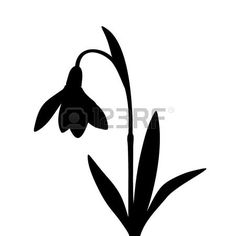 Vector black silhouette of a snowdrop flower isolated on a white background. photo