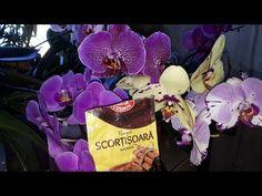 Cum se folosește scorțișoara la orhidee! - YouTube Orchids, Gardening, Make It Yourself, Youtube, Home, Lawn And Garden, Youtubers, Youtube Movies, Horticulture