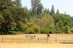#Grass #Valley - Good wineries and other fun things to do including horse back riding! http://www.cheers2wine.com/Nevada-County.html