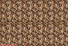 Magic Eye 3D Picture - Here is some cool 3D stereogram pictures