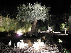 Piscine et Jardins - Tremblais Créateur Bressuire 79| Eclairage - Arrosage | Eclairage d\'un olivier centenaire