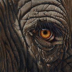 Elephant Eye Painting by Jurek Zamoyski - Elephant Eye Fine Art Prints and Posters for Sale
