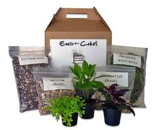 Fairy Garden Plants, Fairy Garden Furniture, Diy Terrarium Kit, Potting Soil, Diy Kits, Arts And Crafts Kits