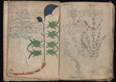 The Most Secretive Book in History Voynich Manuscript, Mind Reading Tricks, Cryptozoology, Old Maps, Occult, Archaeology, The Secret, Creepy, My Books