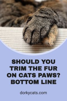 If you wonder if you should trim the fur on cats paws, so they look nice, the answer is a definitive NO. Do not trim cat fur between the pads even if it becomes long unless it is really necessary. Cat Paws, Cats And Kittens, Fur, Cold, Legs, Natural, Feather, Nature, Fur Coat