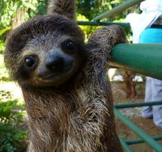 Adorable and Cute Sloth