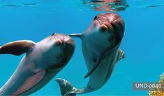 Funny dolphins by Vitaly-Sokol on deviantART Cozumel, Cancun, Funny Dolphin, Underwater Wallpaper, Baby Animals, Cute Animals, Cute Animal Photos, Beautiful Ocean, Sea World