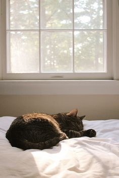 """If there is one spot of sun spilling onto the floor, a cat will find it and soak it up."" --Joan Asper McIntosh"