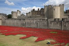 PHOTOS: Ceramic poppies surround Tower of London to commemorate WWI
