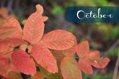 indigo 26: October Chronicle + Thoughts On Why I Blog