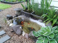 Pinner States: My pond. Reused rainwater from the downspout filters thru the cement sink bog & runs down the chainmail into the pond. Koi and goldfish too. I enjoy it so much! Backyard Water Feature, Ponds Backyard, Garden Ponds, Backyard Ideas, Japanese Plants, Natural Pond, Smart Garden, Rain Garden, Rainwater Harvesting