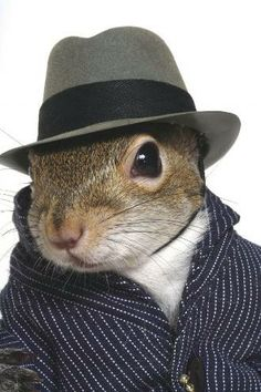 A higher class of squirrel.