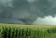 Nice wedge tornado.