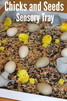 Chicks and Seeds Sensory Tray