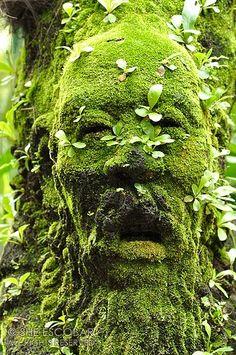 The Green Man, Singapore Botanical Garden