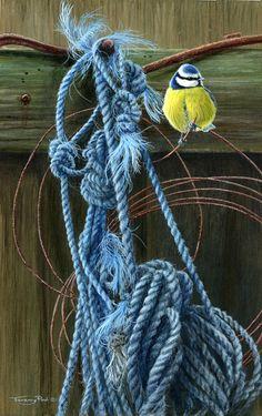 old ropes blue tit by Jeremy Paul