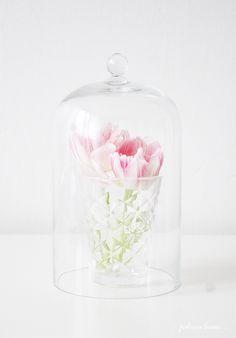 Tulips tulppaaneja
