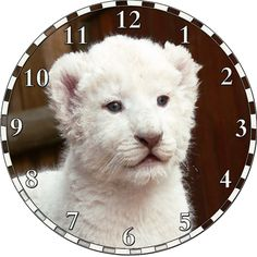White Lion Cub Clock: Get this design and more at http://www.cafepress.com/sammysmomscustomdesign
