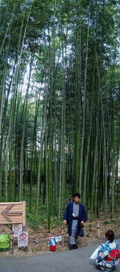 Kyoto, Voyage Nepal, Monkey Park, Travel, Santiago, Music School, Viajes, Destinations