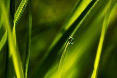 Macro Drop On Grass