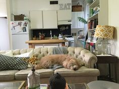 Living room and kitchen with a big couch. And a big dog.