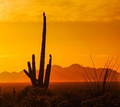 Sitting on a cactus! - 'Birds In Silhouette' - http://fineartamerica.com/featured/birds-in-silhouette-penny-lisowski.html