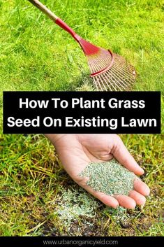 Gardens Discover Overseeding Lawn: How To Plant Grass Seed On Existing Lawn Planting Grass Seed Lawn Treatment Lawn Care Tips Lawn Care Schedule Fall Lawn Care Bermuda Grass Lawn And Garden Garden Tools Small Garden No Grass Grass Seed, Grass, Planting Herbs, Lawn And Garden, Planting Grass, Lawn Treatment, Overseeding Lawn, Grasses Garden, Grass Care