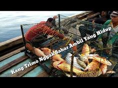 Alhamdulillah, in the morning, pulling Bubu can be a Sono grouper,trap fish // Bubu mania episode 7 Alhamdulillah, Fish, Youtube, Sleep, Youtube Movies
