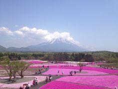 В Японии весной цветет не только сакура