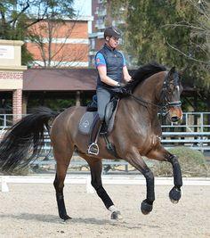 Carl Hester – Teaching Eventers Dressage | The Horse Magazine – Australia's Leading Equestrian Magazine