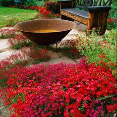 Dianthus 'Zing Rose'   Flowers in Space - traditional - landscape - denver - MARPA DESIGN STUDIO