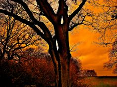 Tree (Mill Hill Park) in sunset Love this capture of the evening sun setting