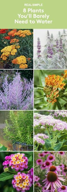 House Plant Maintenance Tips 8 Plants Youll Barely Need To Water Two Experts Share Their Favorite Drought-Tolerant Plants That Will Make Your Life Easier And Help You Save Water Garden Shrubs, Landscaping Plants, Front Yard Landscaping, Garden Plants, Landscaping Ideas, Landscaping Software, Xeriscape Plants, Farmhouse Landscaping, Water Garden