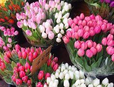 Tulips! Tulips, Tulips Flowers, Tulip