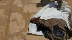 We need a real law to protect animals in Egypt
